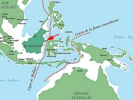 La ligne de Wallace marque la séparation entre les faunes australiennes et asiatiques.
