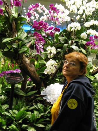 Jardin d'orchidées (Aéroport de Singapour)