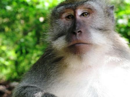 Dans la forêt aux singes (Ubud - Bali)