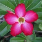 Traversée de Bali 12-09 065