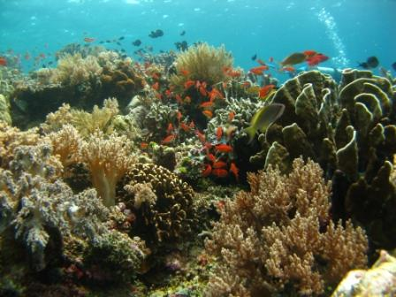 Vue sous-marine (Taka Bonerate)