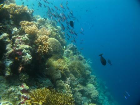 Vue sous-marine - Wakatobi