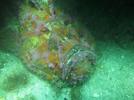 Poisson scorpion (port de Ambon - Molluques)