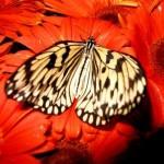 Jardin de papillons (Aéroport de Singapour)