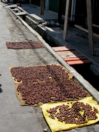 Noix de Muscade au séchage ( Ruang Island)