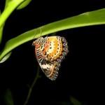 Dans le jardin de papillon de l'aéroport