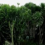 Jardin de cactus (aéroport de Singapour)