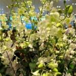 encore et toujours des Orchidées